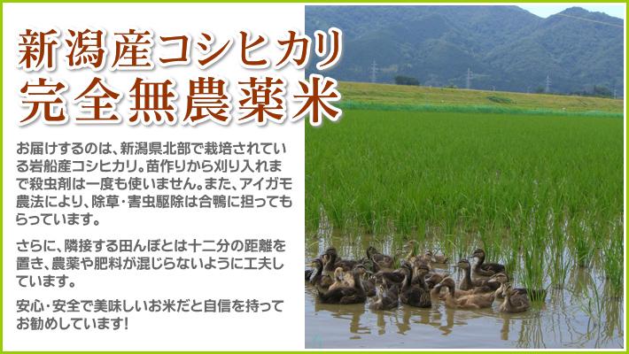 お届けするのは最高級コシヒカリ 無農薬米