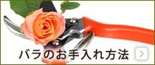 バラのお手入れ方法