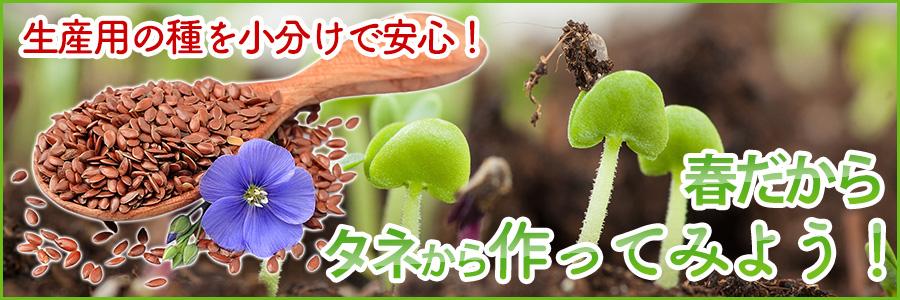 花の種特集