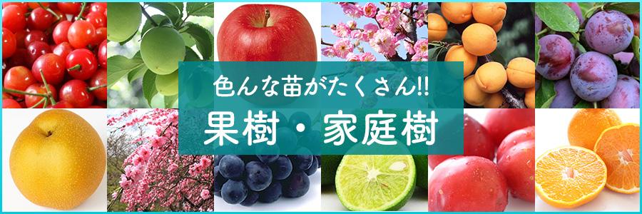 果樹・家庭樹