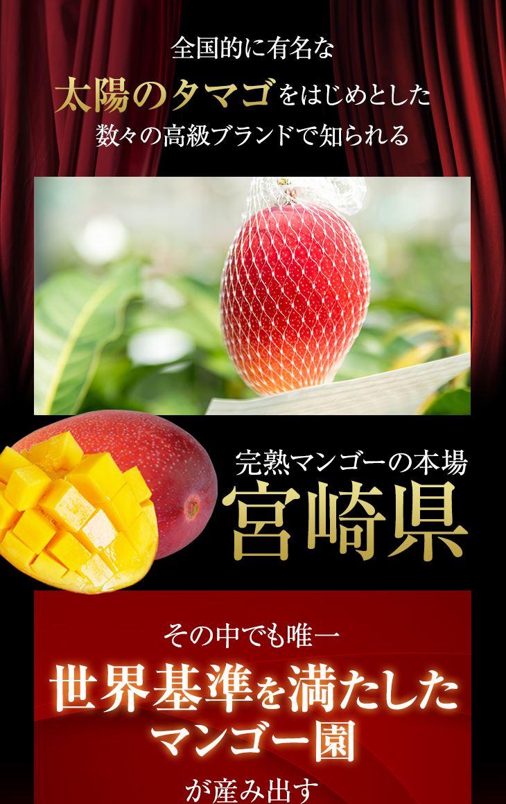 完熟マンゴーの本場宮崎県 その中でも唯一世界基準を満たしたマンゴー園が生み出す
