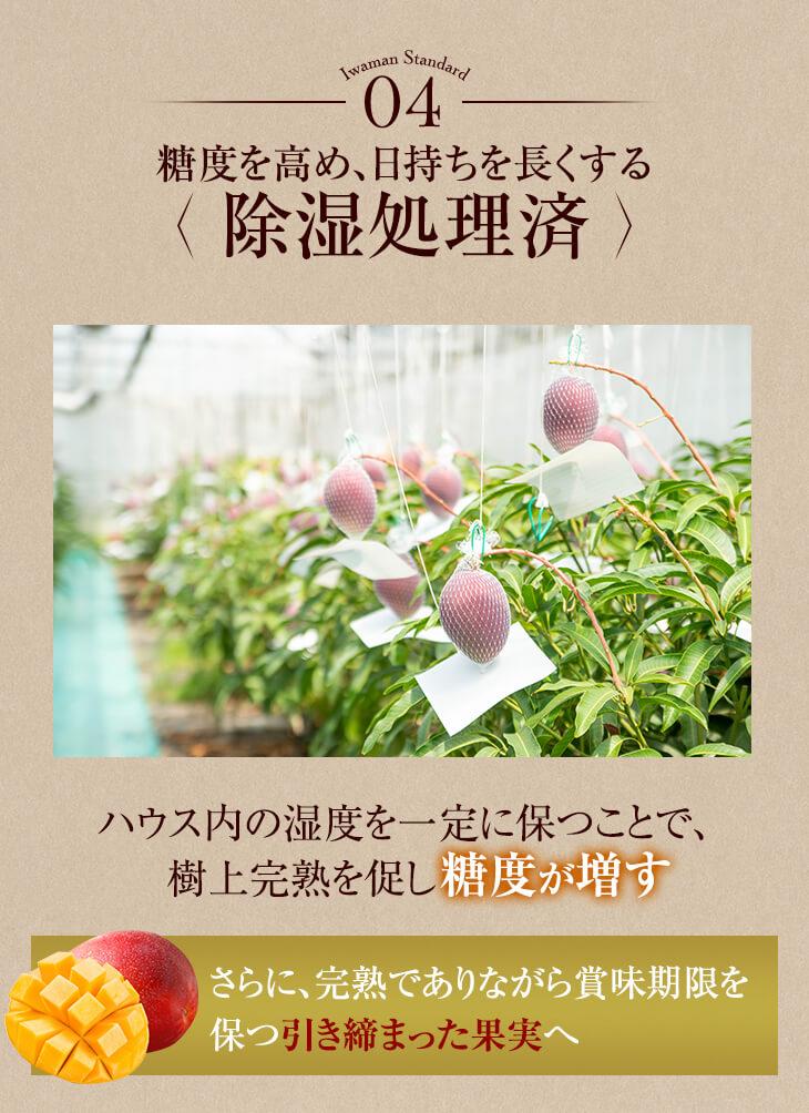 糖度を高め、日持ちを長くする除湿処理済 ハウス内の湿度を一定に保つことで糖度が増す