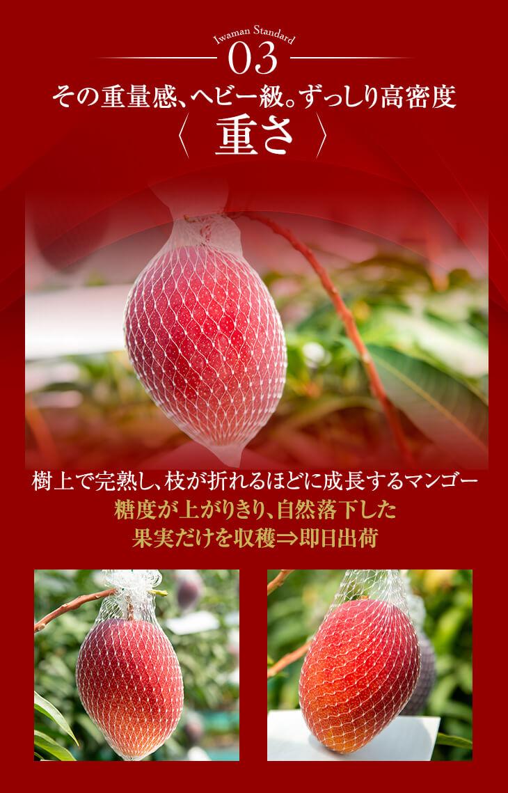 その重量感、ヘビー級。ずっしり高密度 重さ 糖度が上がりきり、自然落下した果実だけを収穫、即日出荷