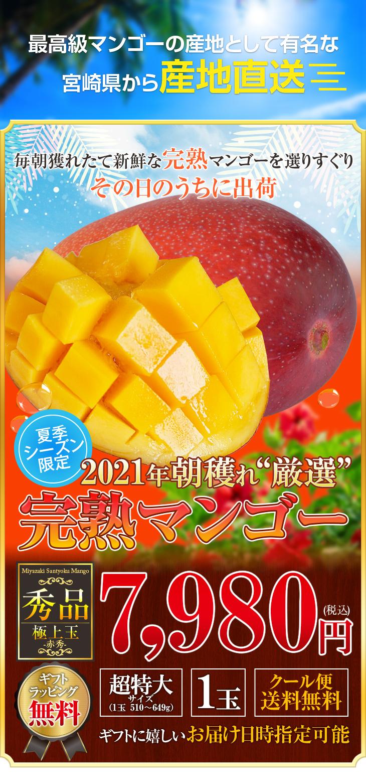 mango-4l-a-超特大サイズ4L×1個