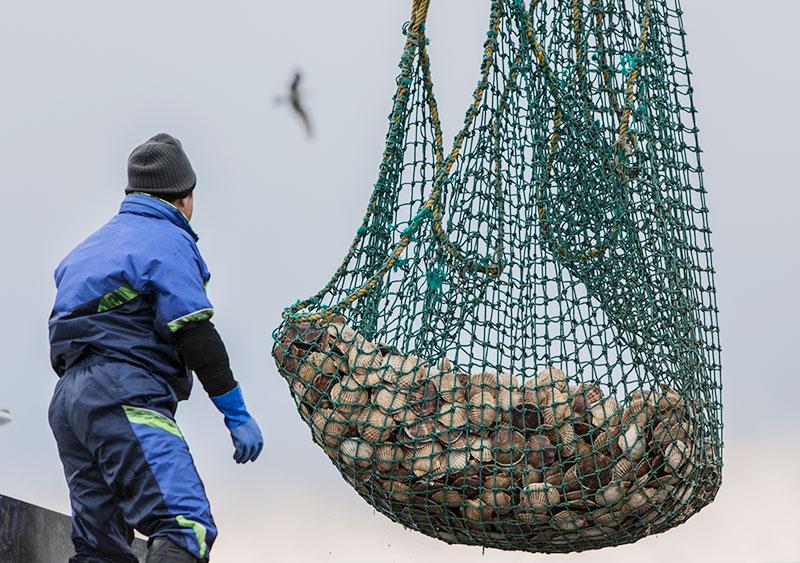 天然活ほたて 5kg 貝付 30枚程度 生きたまま 北海道 オホーツク海 漁港直送 ホタテ 帆立 天然物 湧別 帆立バター焼き 帆立刺身 ミネラル豊富 タウリン BBQ バーベキュー クール便 送料無料 なまらモグぱっく