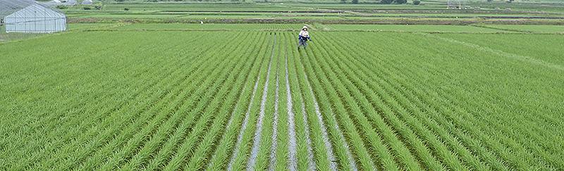 北海道米 ふっくりんこ ふっくりんこ ななつぼし 精米 特別栽培米 送料無料 もぐぱっく
