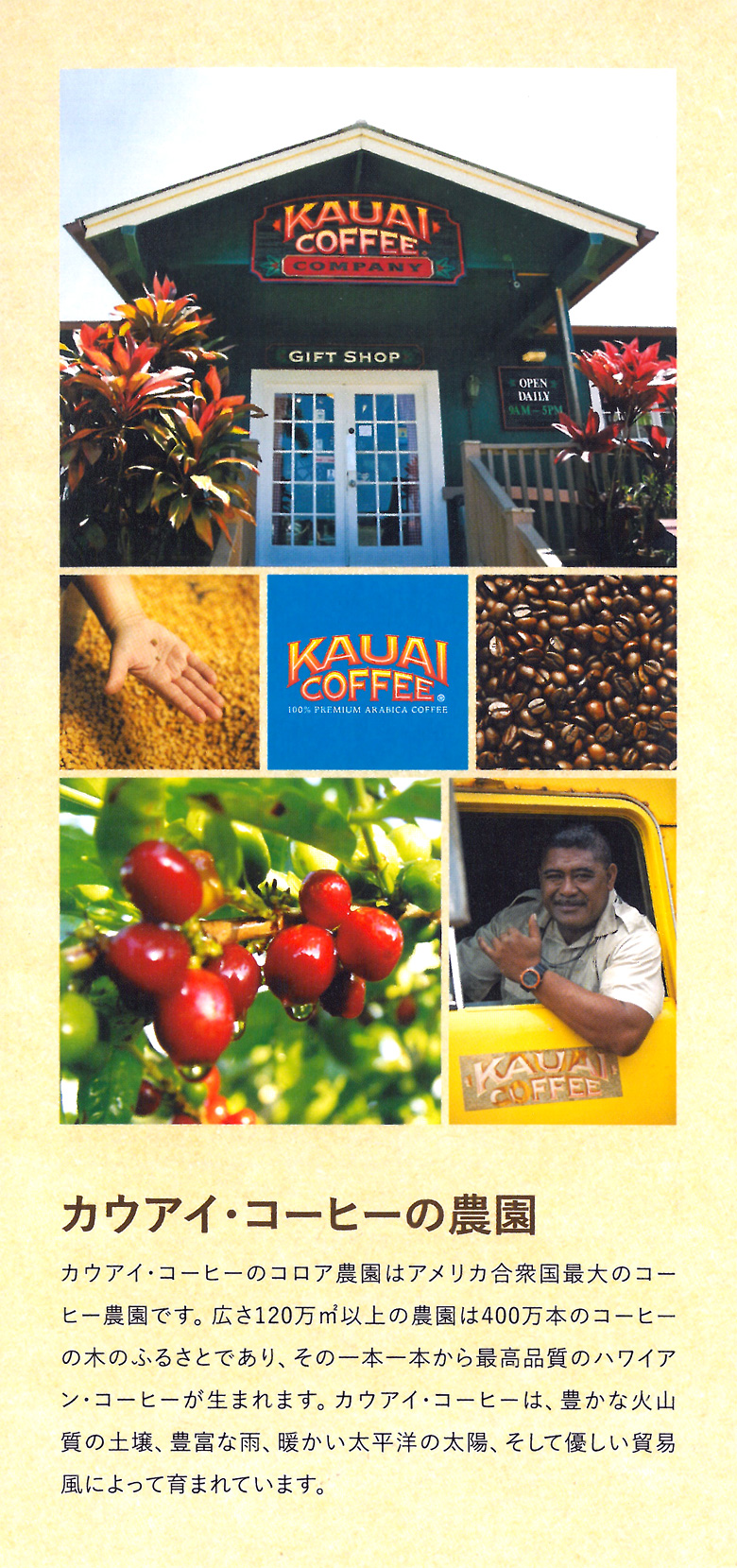 カウアイ・コーヒーの農園