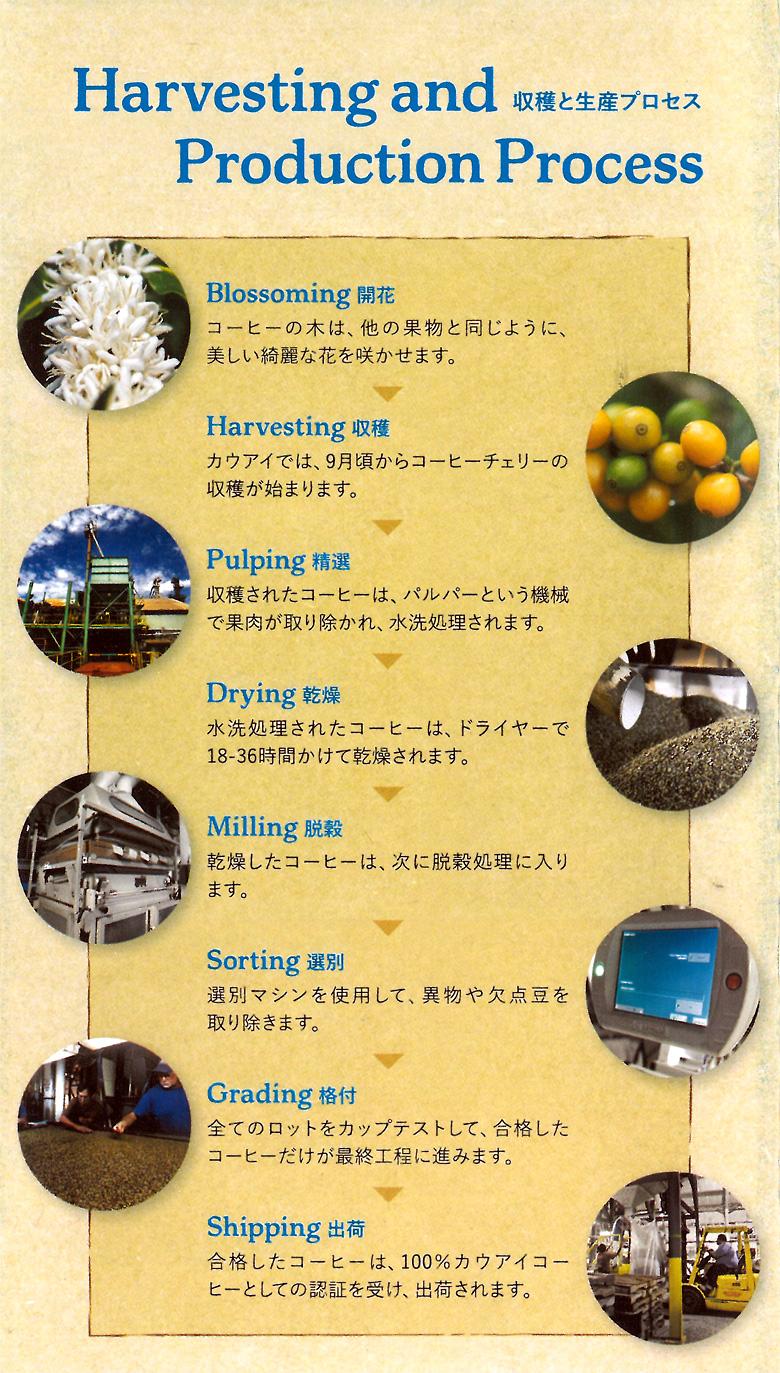 収穫と生産プロセス
