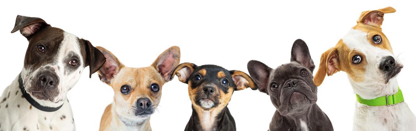卸ネット良品オリジナルドックフード 犬めしアダルト15kg ブリーダーパック 3,980円(税込) 送料無料
