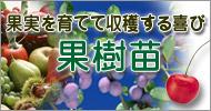 果実を育てて収穫する喜び、果樹苗【ガーデニング・園芸】