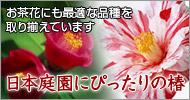 日本庭園にぴったりの椿【ガーデニング・園芸】