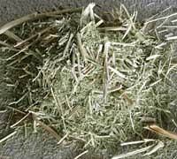 草木染めギャッベ(ギャベ)の染料となるジャシール
