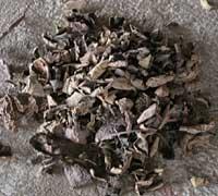 草木染めギャッベ(ギャベ)の染料となるクルミの皮