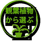 観葉植物カテゴリー、ギフト用鉢植えのお花、観葉、多肉の通販専門店