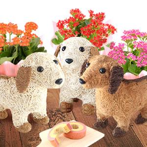 敬老の日 わんちゃん花鉢&お菓子セット