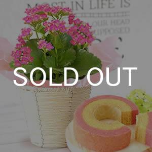 敬老の日 プレゼント 人気カランコエとスイーツ 濃いピンク