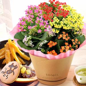 敬老の日  花と和菓子セット