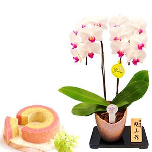 敬老の日  胡蝶蘭とバウム 信楽焼