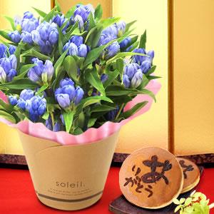 敬老の日  りんどう いわて 和菓子