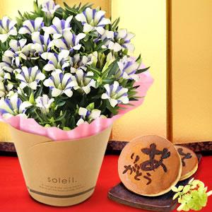 敬老の日  りんどう 白寿 和菓子セット