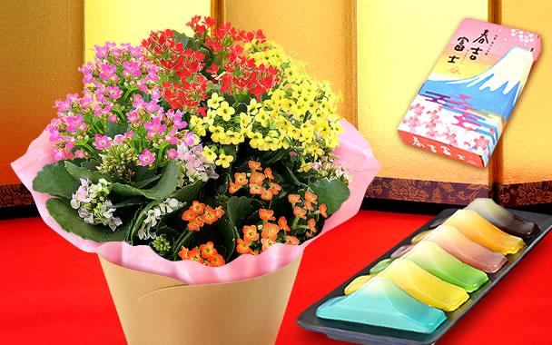 敬老の日 カランコエ5号鉢と富士山羊羹