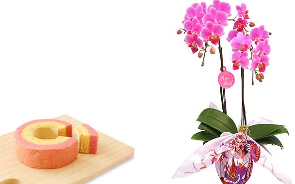 敬老の日  胡蝶蘭とバウム 風呂敷