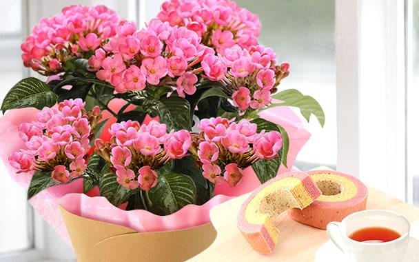 敬老の日 2021 定番の花 匂い桜とバウム
