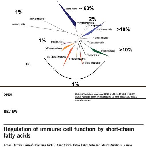 腸内フローラを構成する細菌系統とその割合