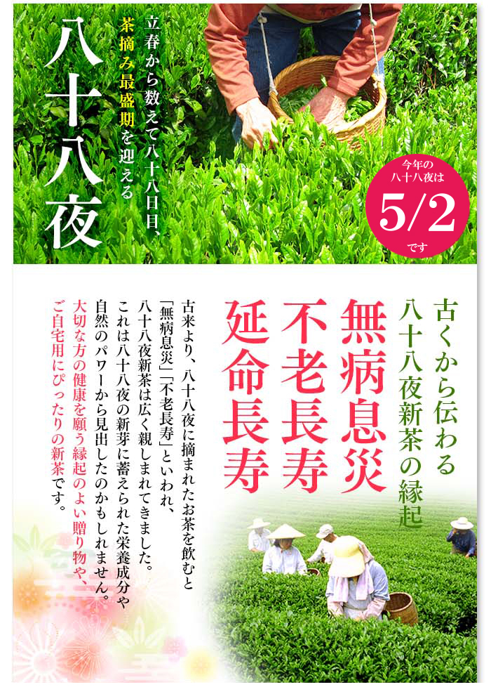 2019 静岡県産 深蒸し煎茶 深むし茶 深蒸し茶 八十八夜