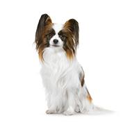 超小型犬(成犬時体重4kg以下)