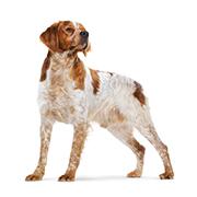 中型犬(成犬時体重11kg~25kg)
