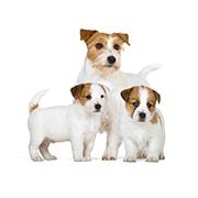 小型犬(成犬時体重10kg以下)