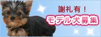 モデル犬募集 謝礼クオカード500円