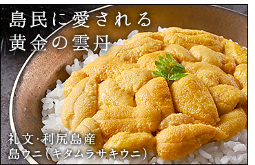 キタムラサキウニ