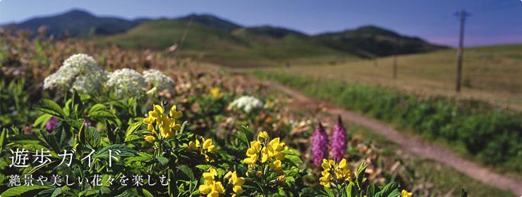 遊歩ガイド 絶景や美しい花々を楽しむ