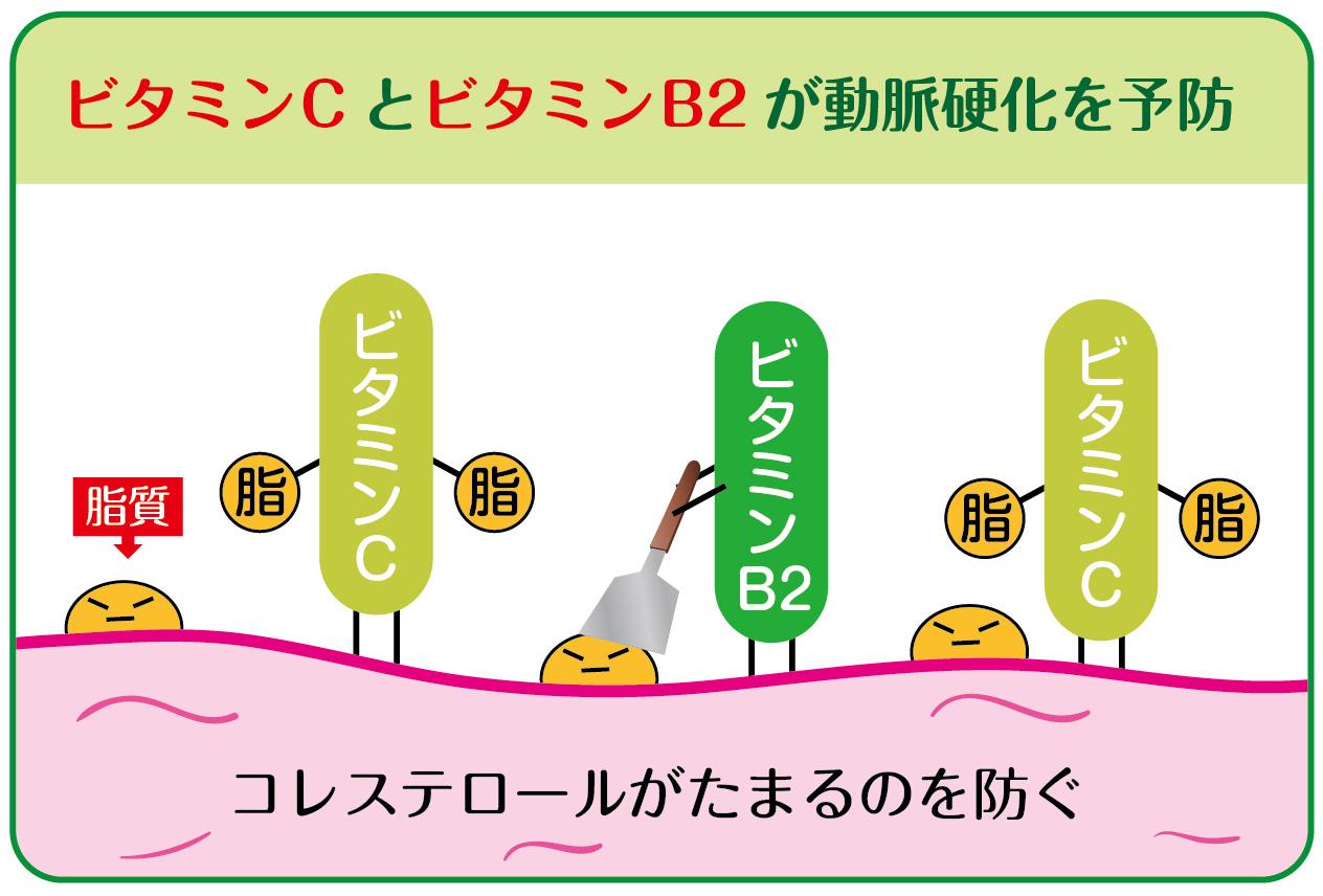 脂質 脂 ビタミン C B2