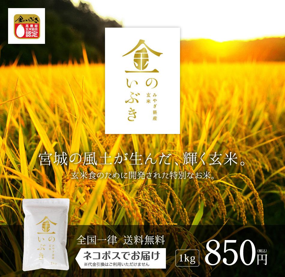 玄米,1kg,金のいぶき,宮城県産,送料無料,令和元年産,宮城の風土が生んだ、輝く玄米