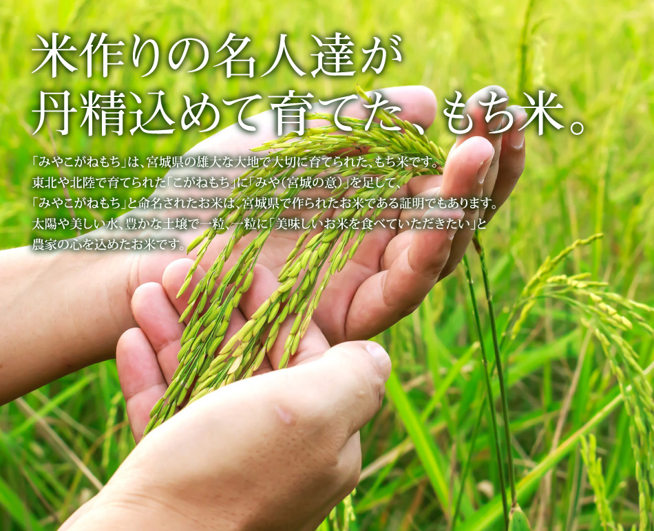 米作りの名人達