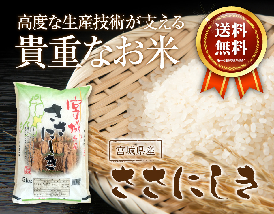 米,20kg,ササニシキ,宮城県産,送料無料,令和元年産