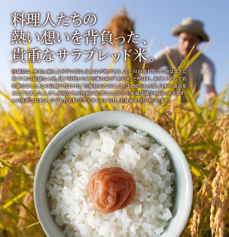 米,10kg,ササニシキ,宮城県産,送料無料,令和元年産,貴重なサラブレッド米