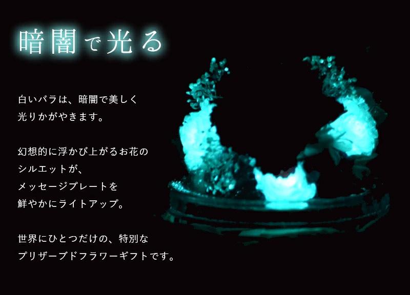 暗闇で光るバラのプリザーブドフラワーの写真