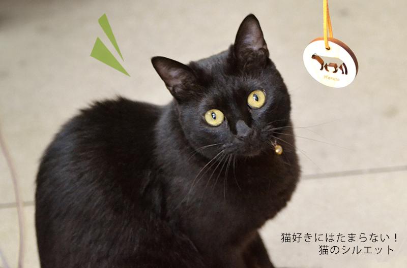 高橋工芸の看板猫チコちゃんです