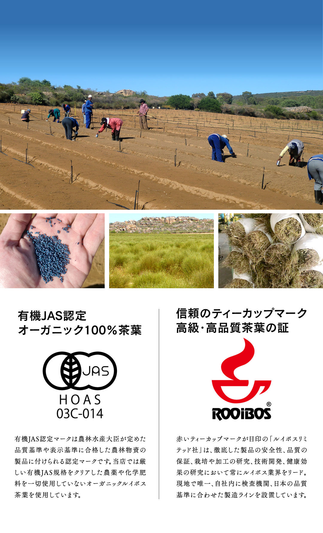 ルイボスの茎や葉を乾燥させたものがルイボス茶葉
