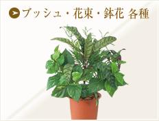 ブッシュ・花束・鉢花 各種