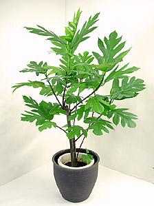 観葉植物パンノキ
