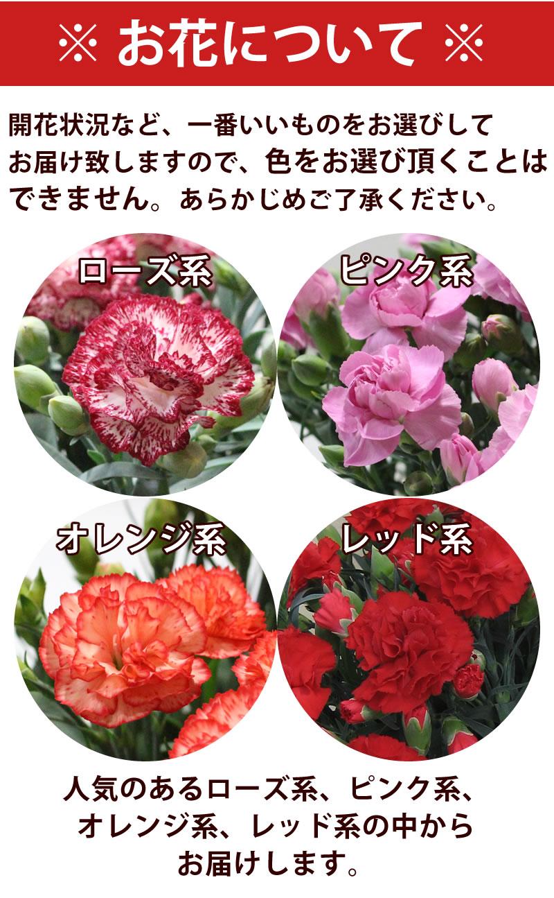 お花の色はお選びいただけません