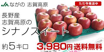志賀高原のシナノ