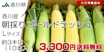香川ゴールドラッシュ