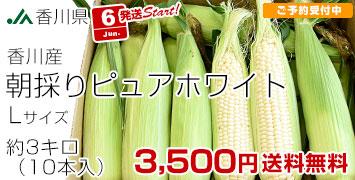香川ピュアホワイト