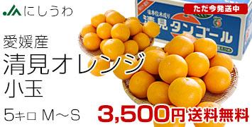 清見オレンジ小玉5キロ